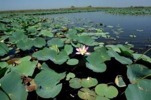 anzali-lagoon-1386333136